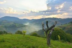 Den härliga alpina ängen med grönt gräs Soluppgång landskap på lösa transylvania kullar Holbav romania Låg tangent, mörk backgr Royaltyfri Bild