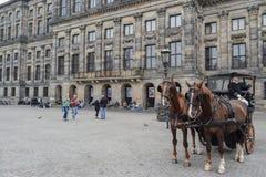 Den härliga Amsterdam i juni Arkivfoton