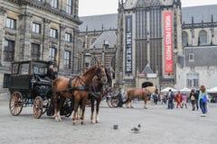 Den härliga Amsterdam i juni Royaltyfria Foton