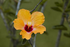Den härliga apelsinen blommar i ett fält Arkivfoton