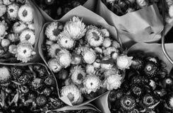 Den härliga blomman shoppar in royaltyfri foto