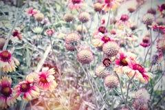 Den härliga blomningen blommar i blommaträdgården, gulingblommor som tänds av solljus royaltyfria bilder