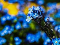 den härliga blueclosen blommar upp Arkivfoto