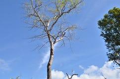 den härliga bluen clouds skyen ram i ljusa dagar Fotografering för Bildbyråer