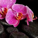 Den härliga brunnsortinställningen av att blomma fattar den avrivna violetta orkidén Arkivbilder