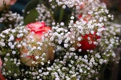 den härliga buketten blommar vita ro arkivfoto
