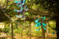 Den härliga cyan blomman kallade Strongylodon macrobotrys i kloster Chua Truc Lam Dalat, Vietnam Royaltyfria Foton