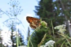 Den härliga färgrika fjärilen på blomman Fotografering för Bildbyråer
