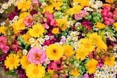 Den härliga färgrika samlingen av blommor fjädrar sommarberöm Royaltyfri Bild