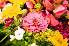Den härliga färgrika samlingen av blommor fjädrar sommarberöm Royaltyfri Fotografi