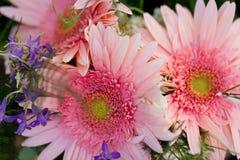 Den härliga färgrika samlingen av blommor fjädrar sommarberöm Royaltyfria Bilder