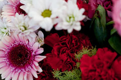 Den härliga färgrika samlingen av blommor fjädrar sommarberöm Royaltyfri Foto