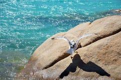 Den härliga fiskmåsen på havet vaggar av Sardinia arkivfoto