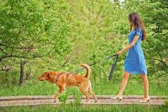 Den härliga flickan går med hunden Arkivfoton