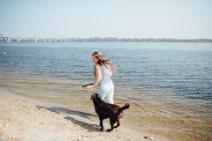 Den härliga flickan spelar med bruna labradors Fotografering för Bildbyråer