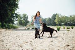Den härliga flickan spelar med bruna labradors Arkivbilder