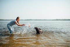 Den härliga flickan spelar med bruna labradors Royaltyfria Foton