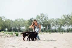 Den härliga flickan spelar med bruna labradors Royaltyfri Foto
