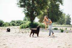 Den härliga flickan spelar med bruna labradors Royaltyfri Bild