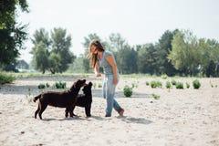 Den härliga flickan spelar med bruna labradors Arkivfoto
