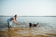 Den härliga flickan spelar med bruna labradors n Royaltyfri Bild