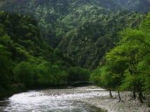 Den härliga floden kör till och med kanjonen, och skogen, berget är full av träd Royaltyfri Foto