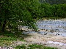 Den härliga floden kör till och med kanjonen och skogen, härliga träd förutom floden Arkivbilder