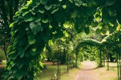 Den härliga gränden i parkerar till och med pergola med gröna sidor av Ari royaltyfri bild