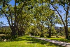Den härliga gröna dalen med träd som täckas med fågeln, bygga bo i Abel Tasman, Nya Zeeland Royaltyfria Bilder