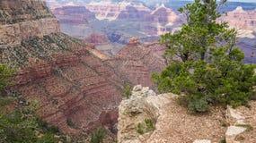 Den härliga Grand Canyon Fotografering för Bildbyråer