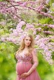 Den härliga gravida kvinnan i rosa färger klär försiktigt, och den rörande buken står nära den körsbärsröda blomningen Royaltyfri Bild