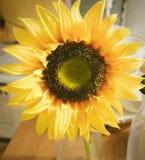 Den härliga gula konstgjorda solrosen blommar på köksbordet Royaltyfri Fotografi