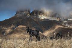 Den härliga hästen på en bakgrund av berg passerar fritt i ett fält arkivfoton
