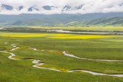 Den härliga höglandet betar royaltyfri fotografi