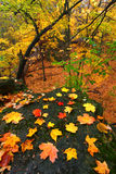 Den härliga hösten Illinois landskap Royaltyfria Bilder