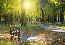 Den härliga hösten parkerar och bänkar royaltyfri foto