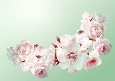 Den härliga horisontalramen med en bukett av vita rosor med regn tappar Tappningtoningbild Arkivfoto