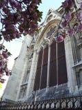 Den härliga körsbärsröda blomningen i Frankrike Royaltyfri Bild