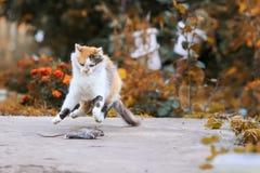 Den härliga katten fångade en mus i sommarträdgården och gyckeln och jet arkivbild