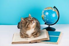 Den härliga katten ligger på en öppen bok katt med exponeringsglas och en bok arkivfoto