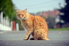 Den härliga katten ser på gatan Royaltyfri Foto