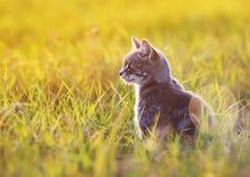 Den härliga katten sitter i det gröna gräset på en solig äng i set Arkivfoto