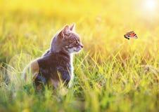 Den härliga katten sitter i det gröna gräset på en solig äng i set Fotografering för Bildbyråer