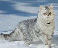 Den härliga katten sitter på på snö Arkivfoto