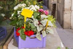 Den härliga krukan blommar på gatan Royaltyfri Fotografi