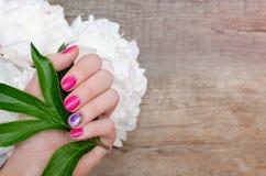 Den härliga kvinnliga handen med rosa färger spikar design royaltyfria foton