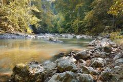Den härliga lösa höstliga skogen med den lilla strömmen eller lösa färgrika stupade sidor för flod och Polsk skog i höst Mörka fö Royaltyfria Bilder