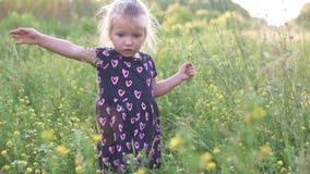Den härliga lilla flickan samlar en bukett av lösa blommor i fältet arkivfilmer