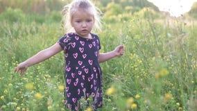 Den härliga lilla flickan samlar en bukett av lösa blommor i fältet lager videofilmer