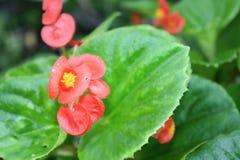 Den härliga lilla rosa färgblommamakroen på gräsplan lämnar bakgrund Arkivfoto
